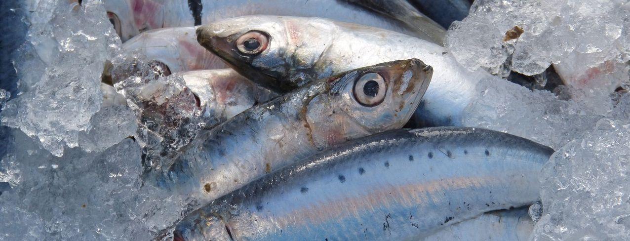 Calitatea uleiului de pește USANA BiOmega
