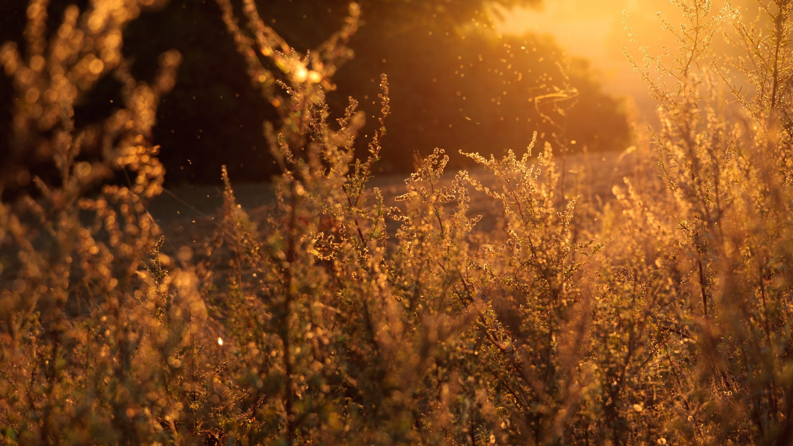 alergii sezoniere polen