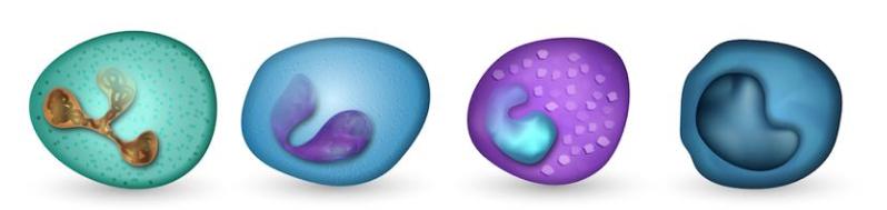 Neutrofile, Eozinofile, Bazofile, Monocite